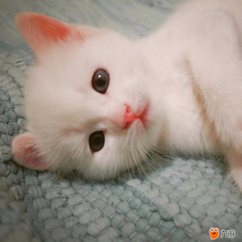 日常吸猫 晒晒我的小可爱